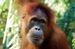 Borneo, Sumatra & Flores Wildlife Safari