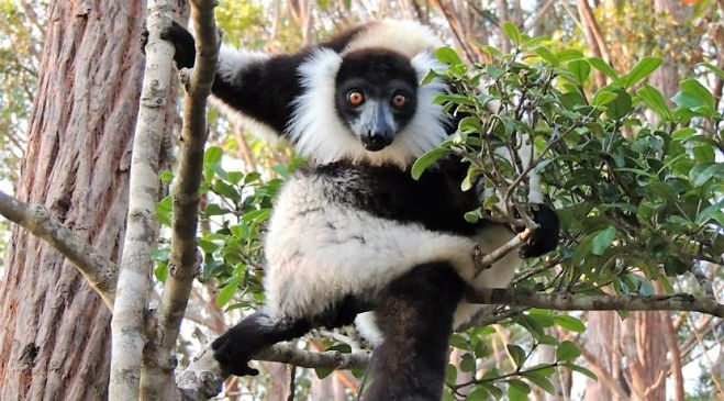 guided walking holidays Madagascar - Mountains & Mystery