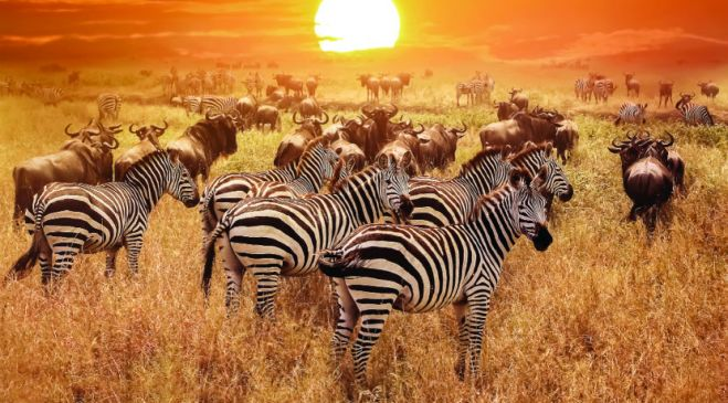 guided walking holidays Tanzania & Kenya - Wildlife & Walks