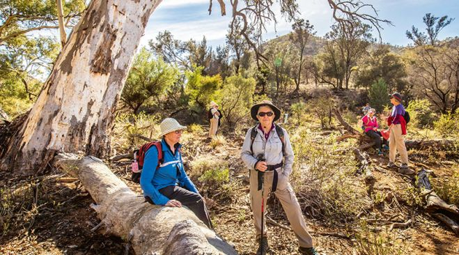 guided walking holidays Flinders Ranges Exploration