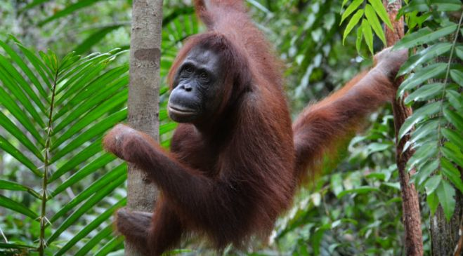 guided walking holidays Borneo, Sumatra & Flores Wildlife Safari