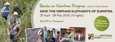 Hands-on Volunteer Program